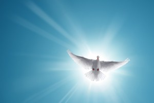 White dove in a blue sky, symbol of faith
