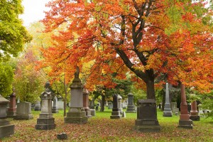 Colourful maple tree in the autumn with gravestones in an urban cemetery.