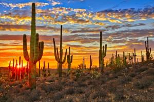 Sunset in Sonoran Desert, near Phoenix.